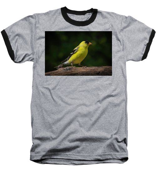 American Goldfinch Male Baseball T-Shirt