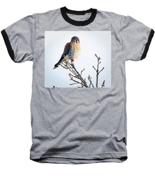 American Kestrel At Bender Baseball T-Shirt
