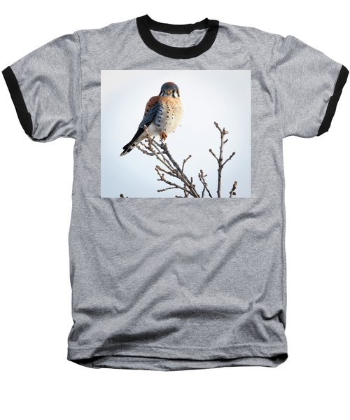 American Kestrel At Bender Baseball T-Shirt