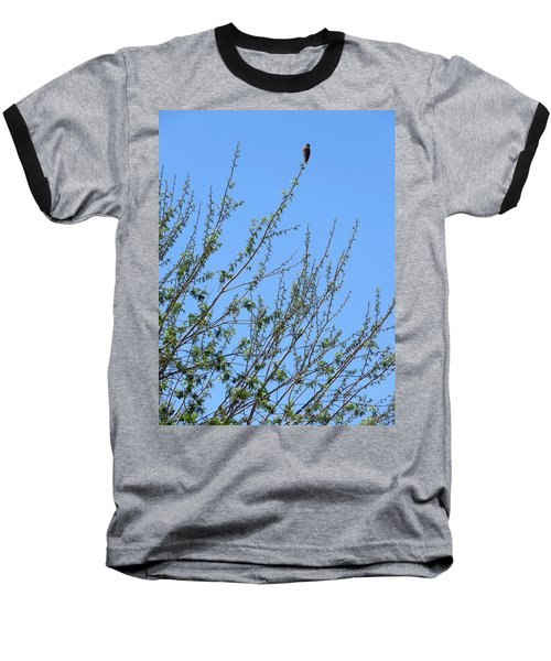 American Kestrel Atop Pecan Tree Baseball T-Shirt