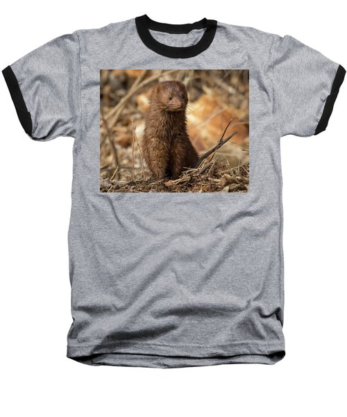 American Mink At Johnson Park Baseball T-Shirt