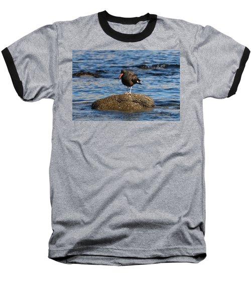American Oystercatcher - 2 Baseball T-Shirt