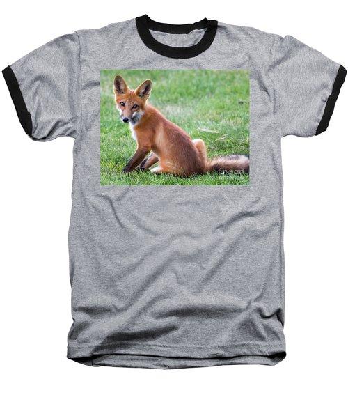 American Red Fox  Baseball T-Shirt