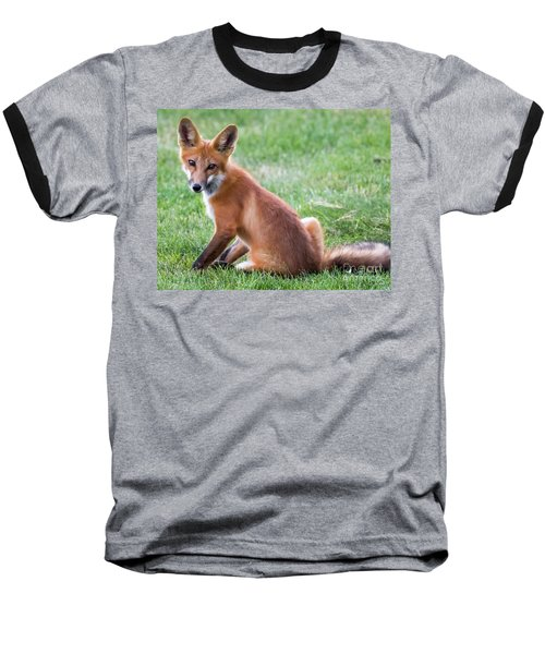 American Red Fox  Baseball T-Shirt