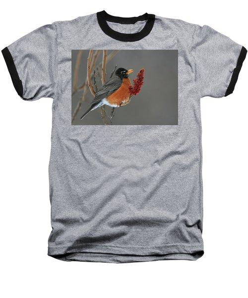 American Robin On Sumac Baseball T-Shirt