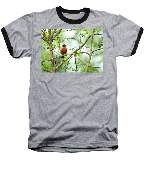 American Robin On Tree Branch Baseball T-Shirt