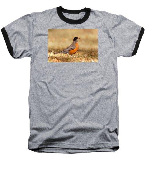 American Robin Baseball T-Shirt by Ram Vasudev