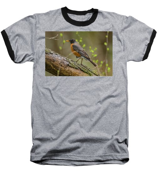 American Robin Baseball T-Shirt by Ray Congrove