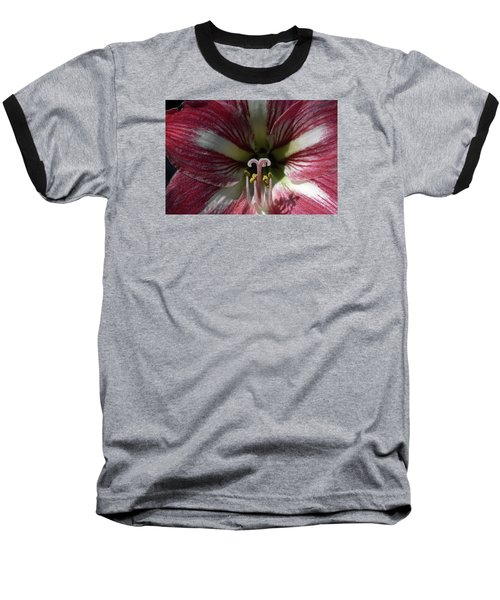 Amaryllis Flower Close-up Baseball T-Shirt by Sally Weigand