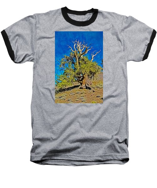 Ancient Bristlecone Pine Baseball T-Shirt