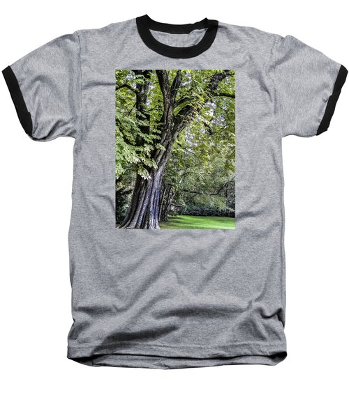 Baseball T-Shirt featuring the photograph Ancient Tree Luxembourg Gardens Paris by Sally Ross