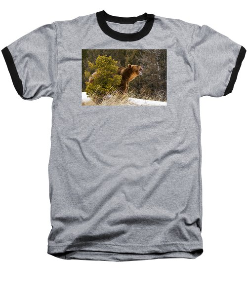 Angry Grizzly Behind Tree Baseball T-Shirt