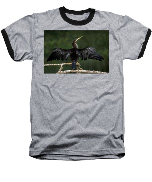 Anhinga Anhinga Anhinga Perching Baseball T-Shirt by Panoramic Images