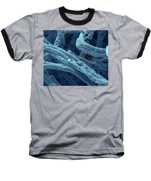 Anthrax Bacteria Sem Baseball T-Shirt