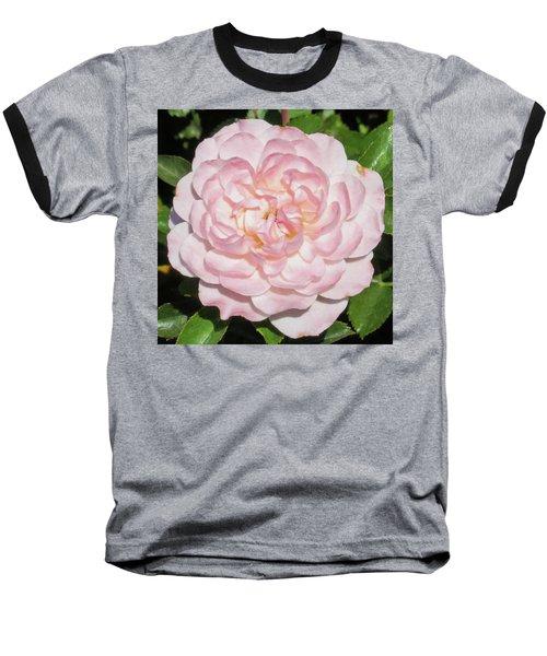 Antique Pink Rose Baseball T-Shirt by Mark Barclay