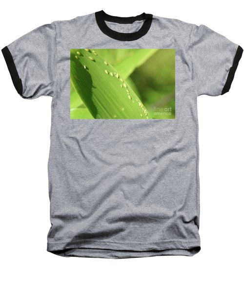 Aphid Family Baseball T-Shirt