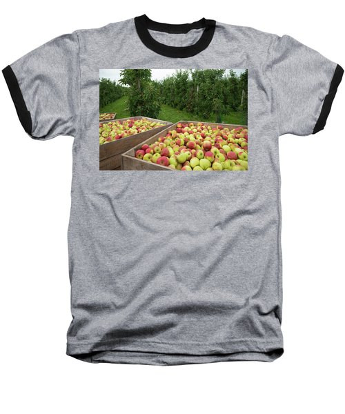 Apple Harvest Baseball T-Shirt by Hans Engbers