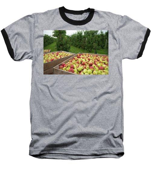 Apple Harvest Baseball T-Shirt by Hans Engbers