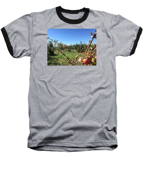Apple Orchard 1 Baseball T-Shirt by Jason Nicholas