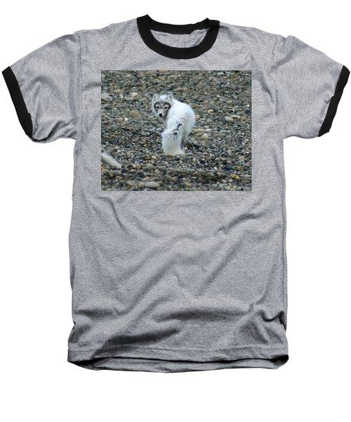 Arctic Fox Baseball T-Shirt by Anthony Jones