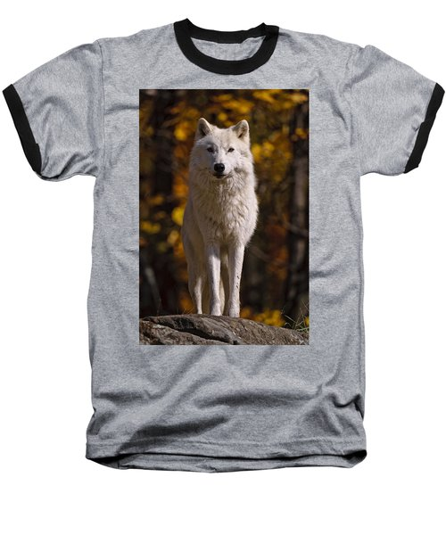 Baseball T-Shirt featuring the photograph Arctic Wolf On Rocks by Michael Cummings