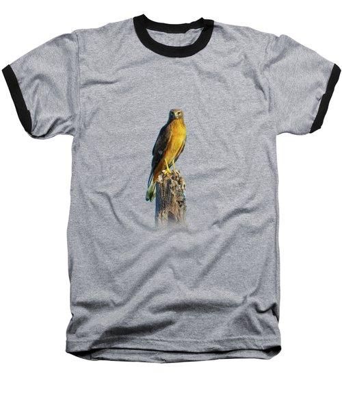 Northern Harrier Hawk Baseball T-Shirt