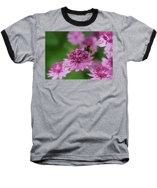 Pollination Baseball T-Shirt by Shirley Mitchell