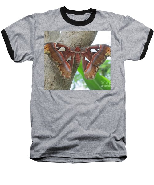 Baseball T-Shirt featuring the photograph Atlas Butterfly by Jeepee Aero