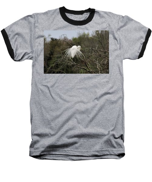 Attractive Plumage Baseball T-Shirt