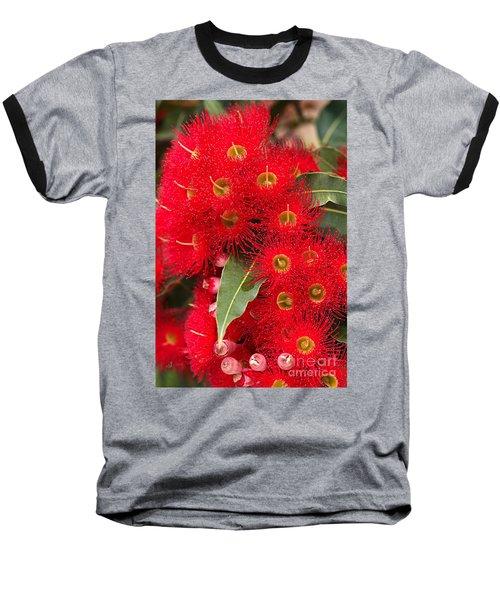 Australian Red Eucalyptus Flowers Baseball T-Shirt