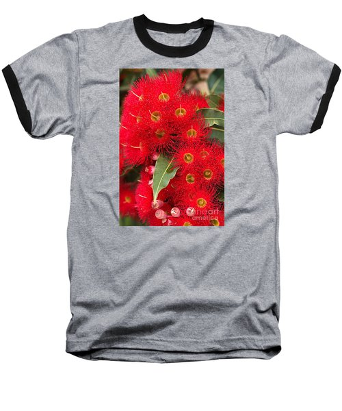 Australian Red Eucalyptus Flowers Baseball T-Shirt