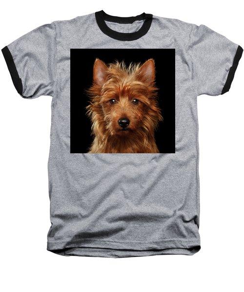 Australian Terrier Baseball T-Shirt by Sergey Taran