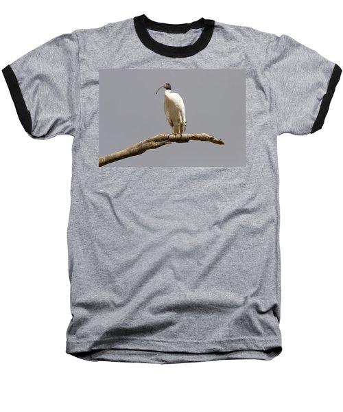 Australian White Ibis Perched Baseball T-Shirt