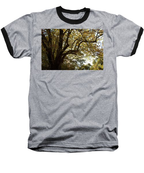 Autumn Branches Baseball T-Shirt