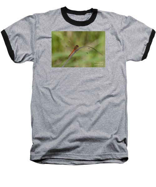 Baseball T-Shirt featuring the photograph Autumn Meadowhawk by Randy Bodkins