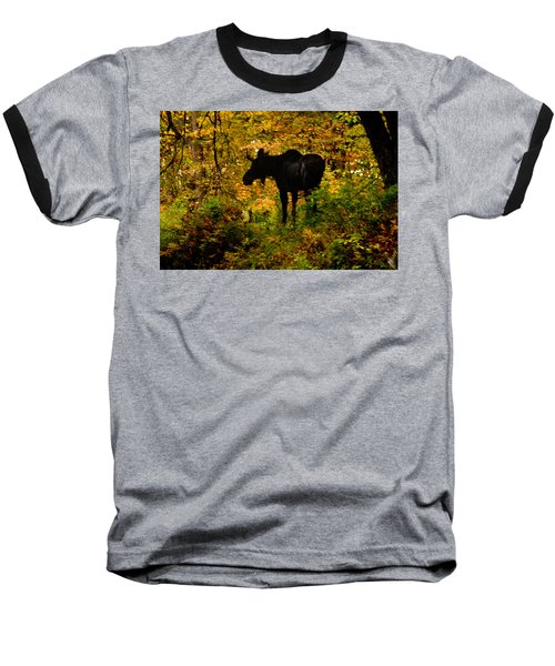 Autumn Moose Baseball T-Shirt by Brent L Ander