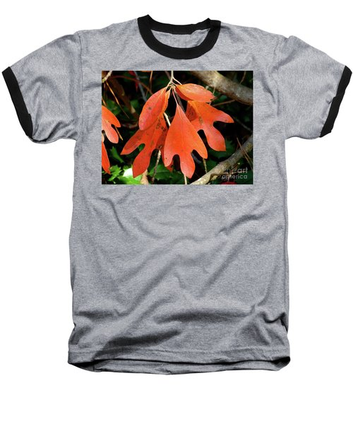 Autumn Sassafras Leaves Baseball T-Shirt