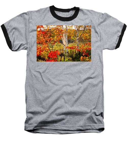 Autumn Scene With Red Leaves And White Birch Trees, Nova Scotia Baseball T-Shirt