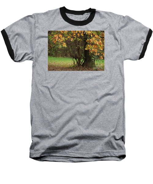 Autumn Tree 2 Baseball T-Shirt by Rudi Prott