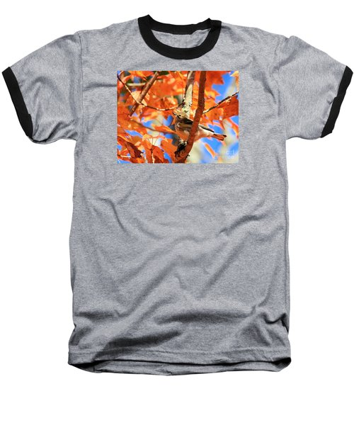 Autumn Warbler Baseball T-Shirt by Debbie Stahre