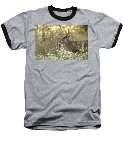 Autumn Whitetail In The Smokies Baseball T-Shirt