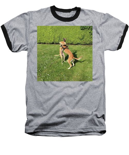 Ava The Saluki And Finly The Lurcher Baseball T-Shirt