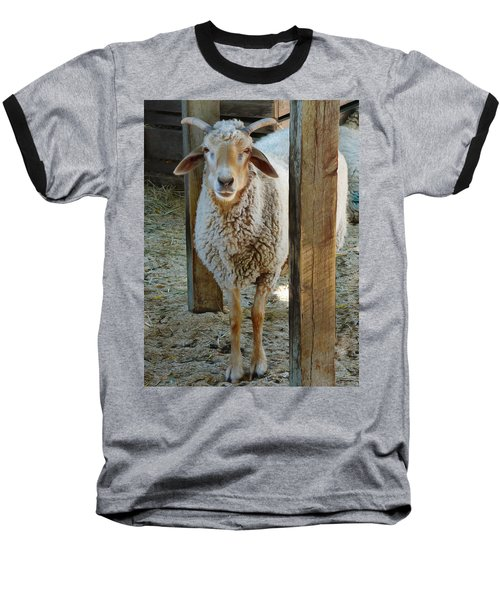 Awassi Sheep Baseball T-Shirt