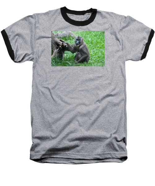 Baseball T-Shirt featuring the photograph Baboon by Monte Stevens