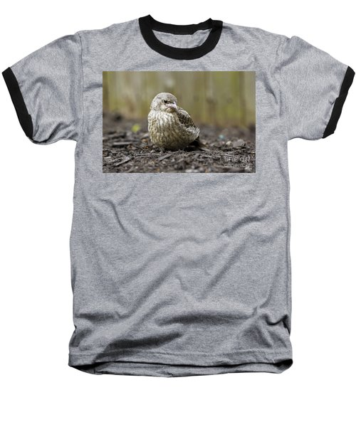 Baby Bird Baseball T-Shirt by Denise Pohl