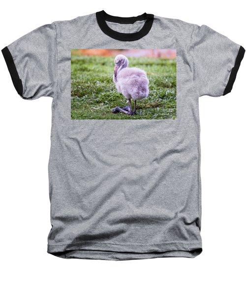 Baby Flamingo Sitting Baseball T-Shirt by Stephanie Hayes