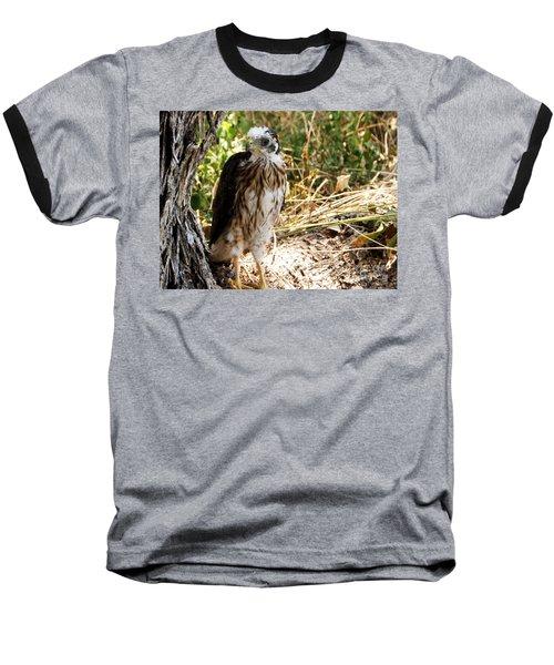 Baby Hawk Fell Out Of Nest Baseball T-Shirt