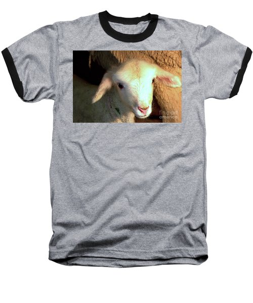 Baby Lamb Baseball T-Shirt