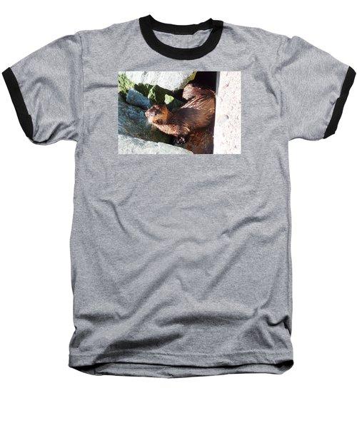 Baby Otter Checking Us Out Baseball T-Shirt by Karen Molenaar Terrell