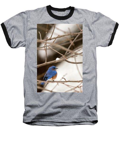 Backyard Bluebird Baseball T-Shirt